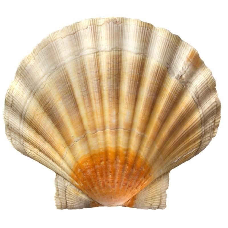 Shell Rimula R5 E