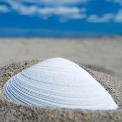 Shell Omala S5 Wind