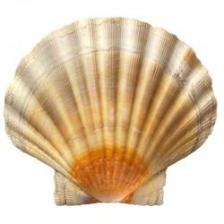 Shell Morlina S2 B 32, 46,...